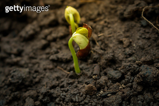 Close-Up Of Plant Growing On Sand - gettyimageskorea