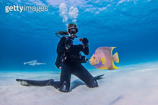 Diver photographing Juvenile Queen Angel fish, underwater view - gettyimageskorea