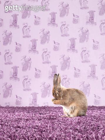 Rabbit on Carpet and Wallpaper - gettyimageskorea