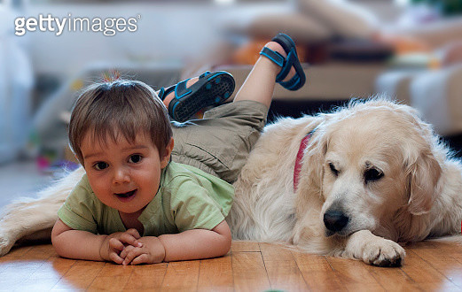 A little boy and a dog playing together - gettyimageskorea
