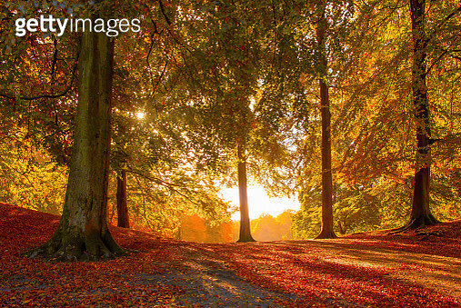A forest just south of Aarhus, Jutland shows off its autumn colours. - gettyimageskorea