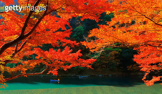 Autumn Colours in Kyoto - gettyimageskorea