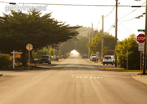 California road with cypress trees creating tunnel effect. - gettyimageskorea