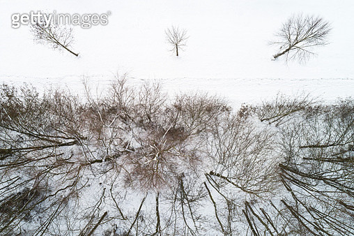 Forest, Footpath and Three Trees From Above in Winter - gettyimageskorea