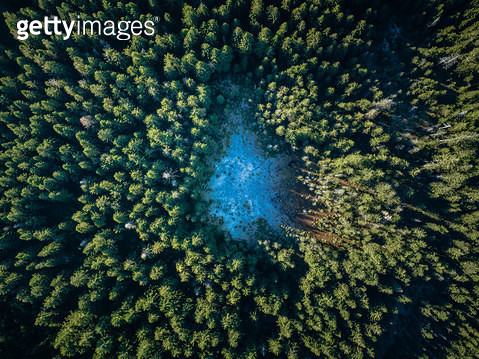 ariel view directly above autumn forest - gettyimageskorea