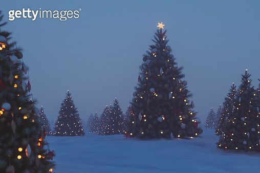 Outdoors Christmas trees at night - gettyimageskorea