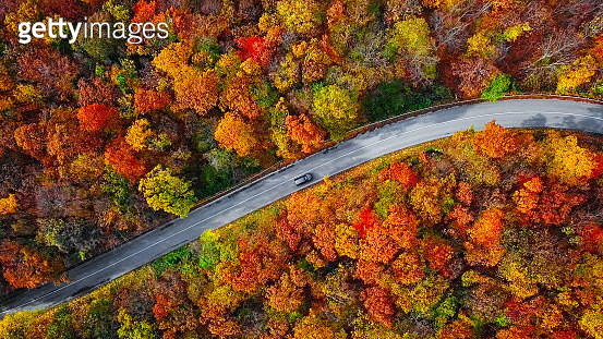 Overhead aerial view of winding mountain road inside colorful autumn forest - gettyimageskorea