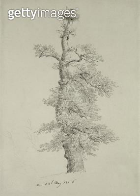 <b>Title</b> : Ancient Oak Tree with a Stork's Nest, 23rd May 1806 (pencil on paper)<br><b>Medium</b> : pencil on paper<br><b>Location</b> : Hamburger Kunsthalle, Hamburg, Germany<br> - gettyimageskorea