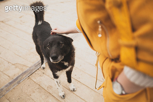 Woman stroking the good old stray dog. Kindness. Humane treatment of animals. Help homeless animals. Lost animals. - gettyimageskorea