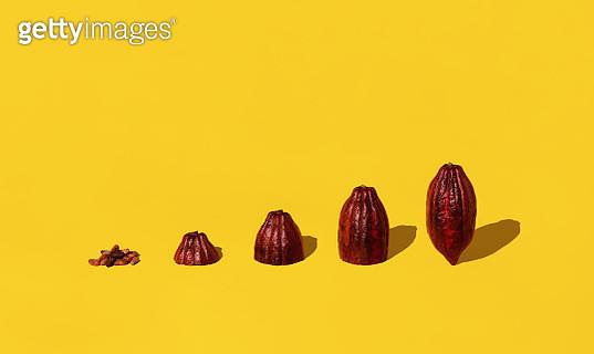 Cacao Beans and Cacao Fruit - gettyimageskorea