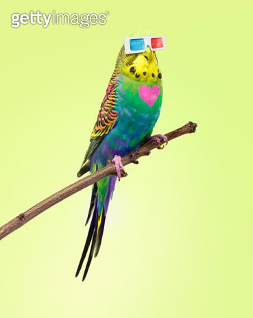 neon rainbow coloured budgie with 3D glasses - gettyimageskorea