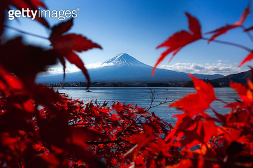 Red Flowering Plants By Sea Against Sky During Autumn - gettyimageskorea