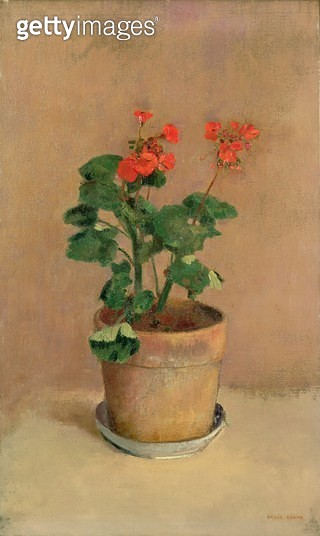 <b>Title</b> : Geraniums in a Pot, c.1905 (oil on canvas)<br><b>Medium</b> : oil on canvas<br><b>Location</b> : Private Collection<br> - gettyimageskorea