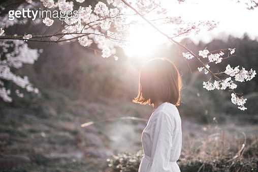 Woman standing the Cherry tree in full bloom - gettyimageskorea