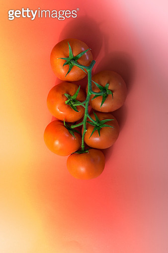 Flat lay Red tomatoes on a twig isolated on a colorful background with copy-space - gettyimageskorea