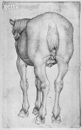 <b>Title</b> : Horse (pen & ink on paper) (b/w photo)<br><b>Medium</b> : pen and ink on paper<br><b>Location</b> : Louvre, Paris, France<br> - gettyimageskorea