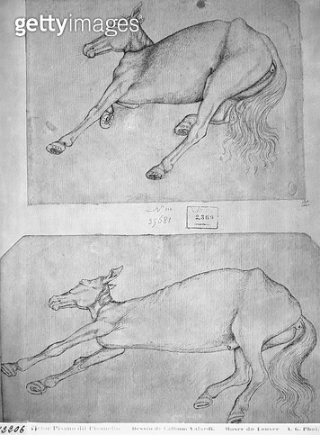 <b>Title</b> : Dead horses (pen & ink on paper) (b/w photo)<br><b>Medium</b> : pen and ink on paper<br><b>Location</b> : Louvre, Paris, France<br> - gettyimageskorea