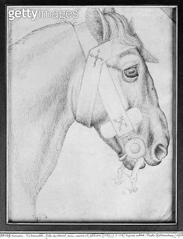<b>Title</b> : Head of a horse (pen & ink on paper) (b/w photo)<br><b>Medium</b> : pen and ink on paper<br><b>Location</b> : Louvre, Paris, France<br> - gettyimageskorea