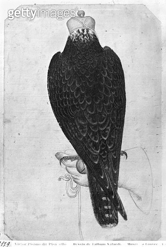 <b>Title</b> : Hawk on hand, seen from behind (pen & ink & w/c on paper) (b/w photo)<br><b>Medium</b> : pen and ink and watercolour on paper<br><b>Location</b> : Louvre, Paris, France<br> - gettyimageskorea