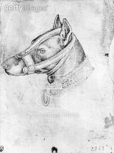 <b>Title</b> : Head of a muzzled dog (pen & ink on paper) (b/w photo)<br><b>Medium</b> : pen and ink on paper<br><b>Location</b> : Louvre, Paris, France<br> - gettyimageskorea