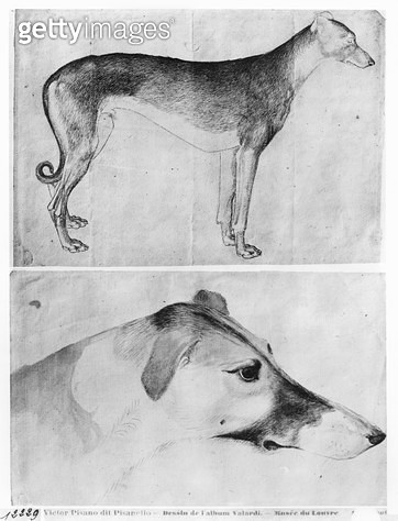 <b>Title</b> : Greyhound and head of a greyhound (pen & ink on paper) (b/w photo)Additional Infolevrier et tete de levrier;<br><b>Medium</b> : <br><b>Location</b> : Louvre, Paris, France<br> - gettyimageskorea