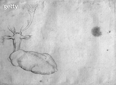 <b>Title</b> : Resting stag, seen from behind (pen & ink on paper) (b/w photo)Additional Infocerf couche, vu de dos;<br><b>Medium</b> : pen and ink on paper<br><b>Location</b> : Louvre, Paris, France<br> - gettyimageskorea
