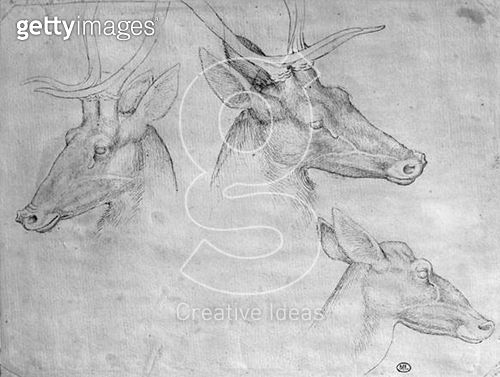 <b>Title</b> : Two heads of stags, one head of a doe (pen & ink on paper) (b/w photo)<br><b>Medium</b> : pen and ink on paper<br><b>Location</b> : Louvre, Paris, France<br> - gettyimageskorea