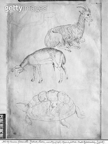 <b>Title</b> : Two tortoises, goat and sheep (pen & ink on paper) (b/w photo)<br><b>Medium</b> : <br><b>Location</b> : Louvre, Paris, France<br> - gettyimageskorea