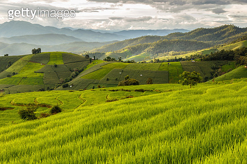 Green Terraced Rice Field in Pa Pong Pieng , Mae Chaem, Chiang Mai, Thailand - gettyimageskorea