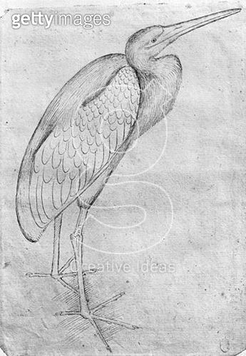 <b>Title</b> : Pelican (pen & ink on paper) (b/w photo)<br><b>Medium</b> : pen and ink on paper<br><b>Location</b> : Louvre, Paris, France<br> - gettyimageskorea