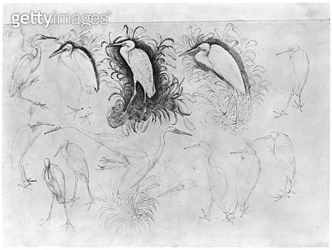 <b>Title</b> : Fourteen egrets (pen, ink & w/c on paper) (b/w photo)Additional Infoformer caption; stork; storks;<br><b>Medium</b> : pen, ink and watercolour on paper<br><b>Location</b> : Louvre, Paris, France<br> - gettyimageskorea