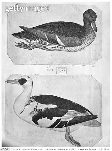 <b>Title</b> : Ducks (pen, ink & w/c on paper) (b/w photo)<br><b>Medium</b> : <br><b>Location</b> : Louvre, Paris, France<br> - gettyimageskorea