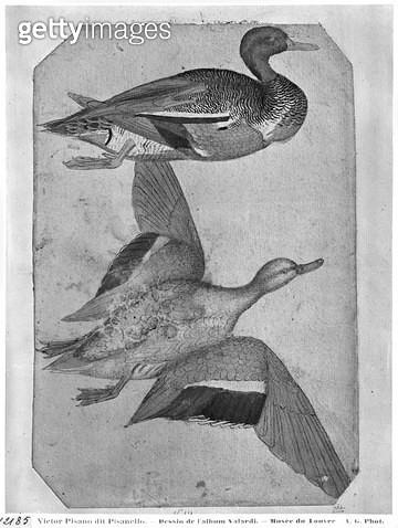 <b>Title</b> : Ducks (pen and ink and w/c on paper) (b/w photo)<br><b>Medium</b> : <br><b>Location</b> : Louvre, Paris, France<br> - gettyimageskorea