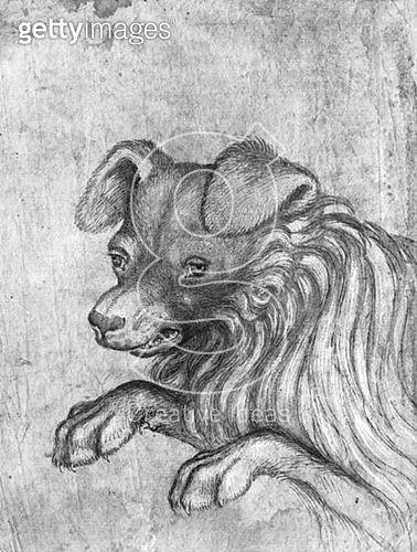 <b>Title</b> : Head of a dog (pen & ink on paper) (b/w photo)<br><b>Medium</b> : pen and ink on paper<br><b>Location</b> : Louvre, Paris, France<br> - gettyimageskorea