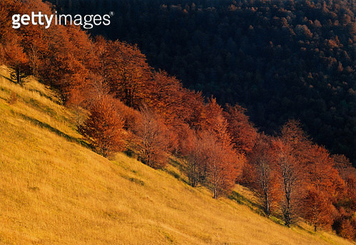Trees On Field During Autumn - gettyimageskorea