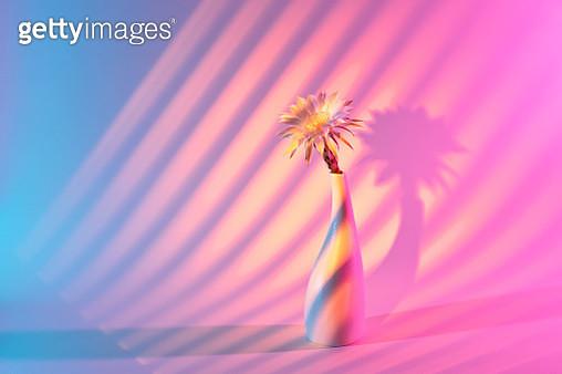 Blinds Sunset Light Effect on Flower Vase Against Colored Background. - gettyimageskorea