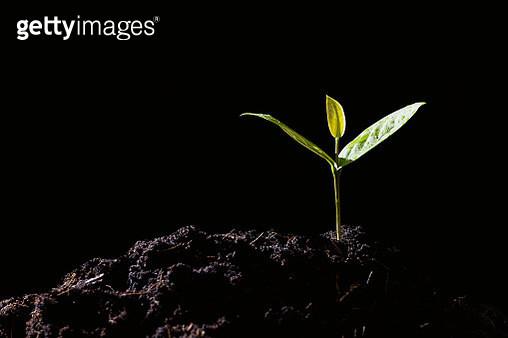Close-Up Of Seedlings Against Black Background - gettyimageskorea