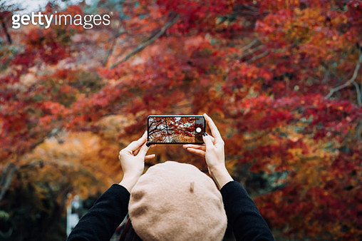 Young Asian female traveller enjoying the beautiful Autumn scenics and taking pictures of the multi-coloured Japanese maple leaves with smartphone in the countryside - gettyimageskorea