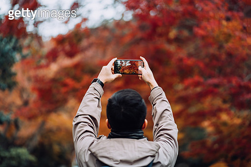 Young Asian male traveller enjoying the beautiful Autumn scenics and taking pictures of the multi-coloured Japanese maple leaves with smartphone in the countryside - gettyimageskorea