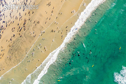 New Year's Day Event in San Diego called The Penguin Plunge - gettyimageskorea