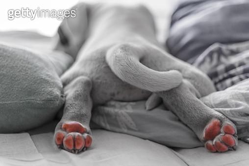 Puppy paws - gettyimageskorea