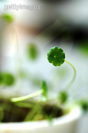 Green Sprout Plant - gettyimageskorea