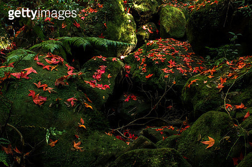 High Angle View Of Red Flowering Trees On Field - gettyimageskorea