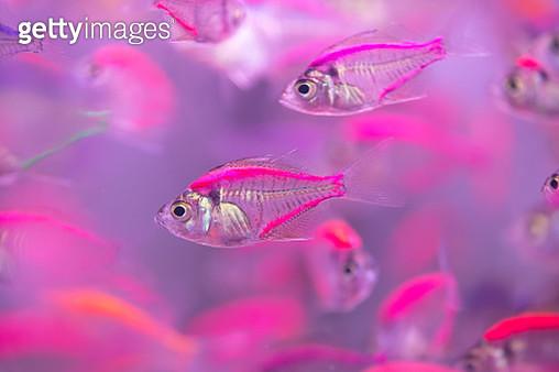 Beautiful fish,fish - gettyimageskorea