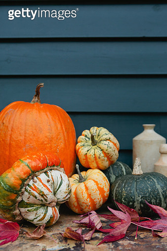 Autumn pumpkins and squash, with acer tree leaves - gettyimageskorea