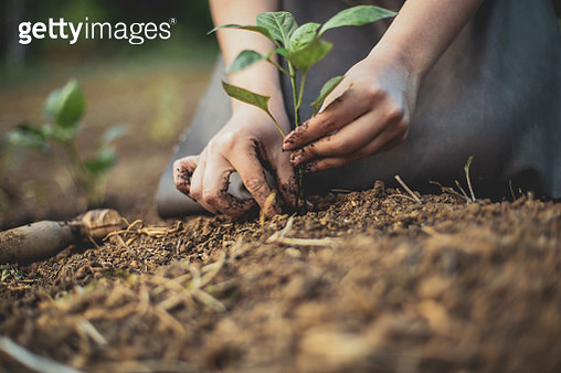 """Seedling moving to """"a bigger house"""" - gettyimageskorea"""
