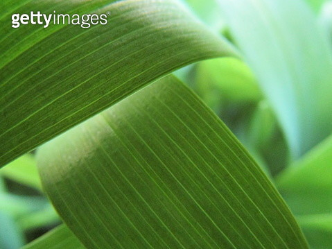 Close-Up Of Green Leaves - gettyimageskorea