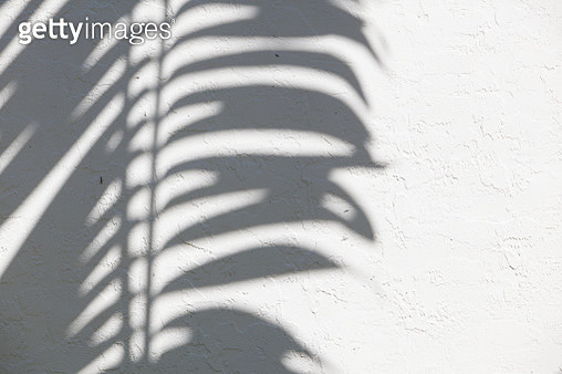 palm trees silhouette with contrasting light hitting a white wall - gettyimageskorea