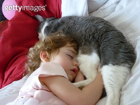 High Angle View Of Baby Girl Sleeping With Cat On Bed At Home - gettyimageskorea