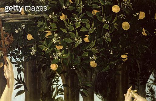 <b>Title</b> : Primavera, detail of the Orange Tree, c.1478 (tempera on panel)<br><b>Medium</b> : <br><b>Location</b> : Galleria degli Uffizi, Florence, Italy<br> - gettyimageskorea